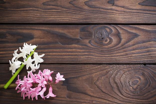 Jacintos flores sobre fundo escuro de madeira