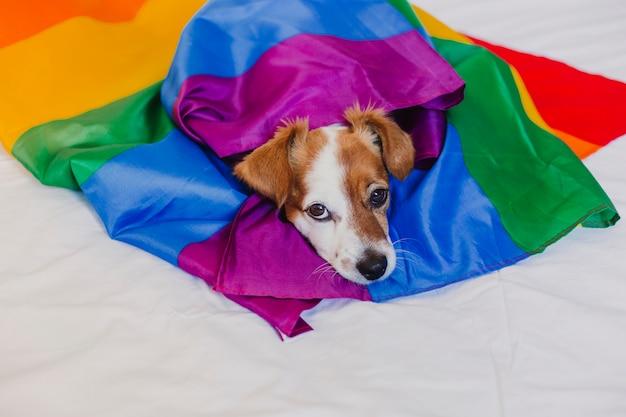 Jack bonito cão russell envolvido na bandeira do arco-íris lgbt na cama branca no quarto. comemore o mês do orgulho e o conceito de paz mundial. amor é amor