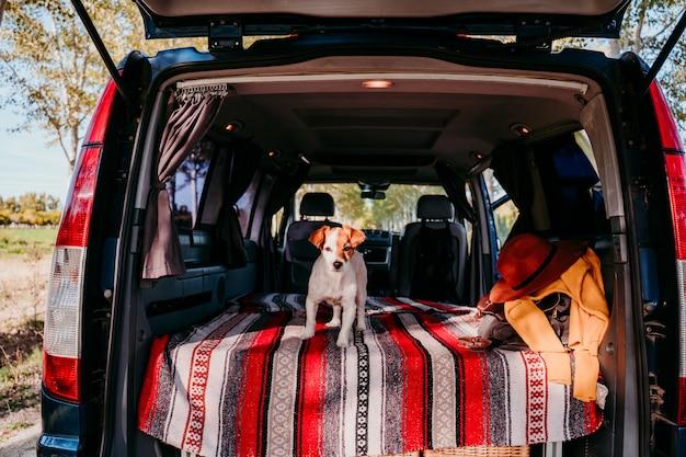 Jack cute russell cachorro relaxante em uma van. conceito de viagens