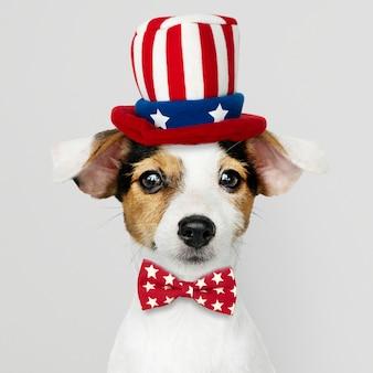 Jack russell terrier bonito no chapéu do tio sam e gravata borboleta