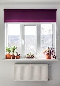 Janela com persiana roxa e plantas caseiras em vasos de flores no parapeito da janela.