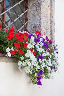 Janela com vasos de flores e flores coloridas em uma parede branca