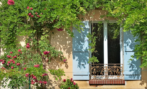 Janela de veneziana azul da fachada de uma casa coberta por uma rosa trepadeira