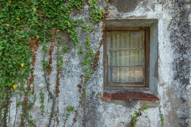Janela vintage coberta por vegetação