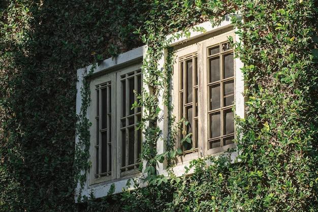 Janelas de madeira velhas são cobertas com folhas ao redor