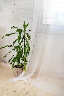 Janelas de vidro com cortinas brancas, flor em um pote no chão e vista sobre as árvores.