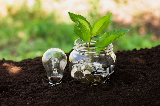 Jar com poupança e pequena árvore na terra