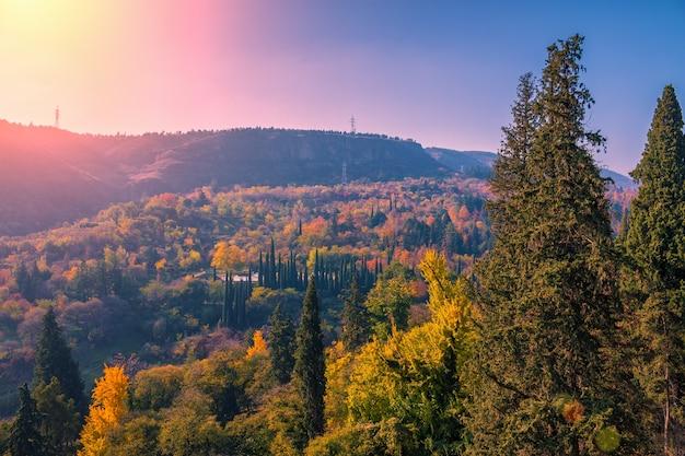 Jardim botânico ao pôr do sol na cidade de tbilisi, país da geórgia