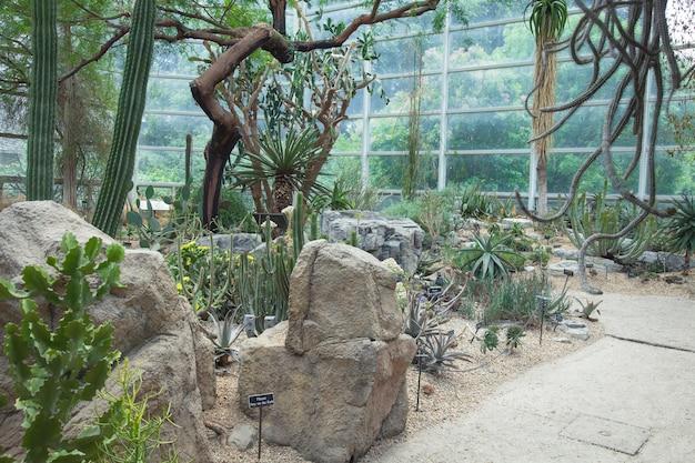 Jardim botânico. estufa com cactos em um jardim botânico.
