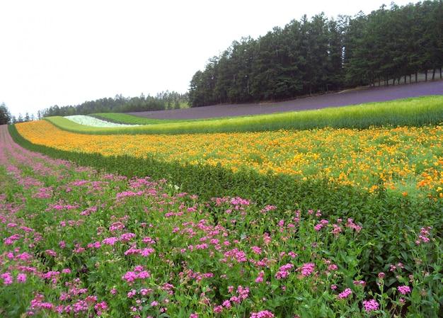 Jardim botânico multi cor na ilha de hokkaido do japão