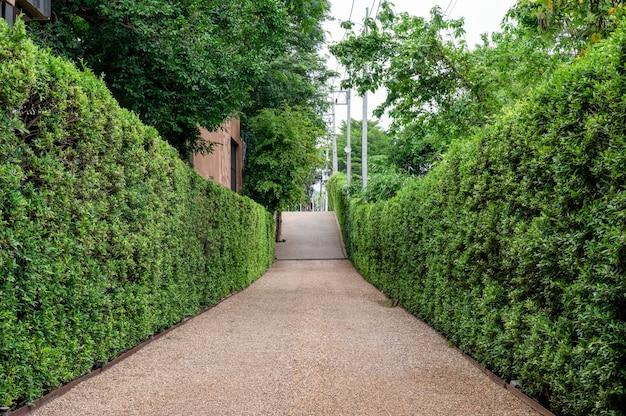 Jardim de arbusto verde natural e passagem de cascalho