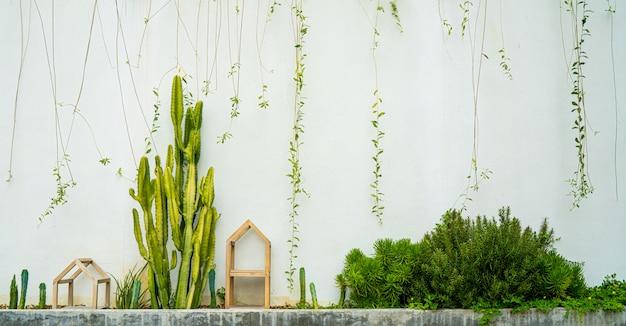 Jardim de cactos na parede branca