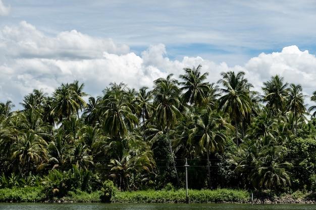 Jardim de coqueiros de verão tropical com nuvens e céu azul