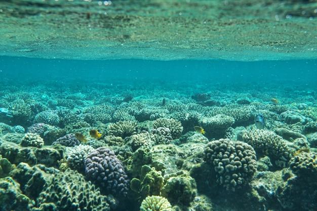 Jardim de coral cheio de peixes coloridos