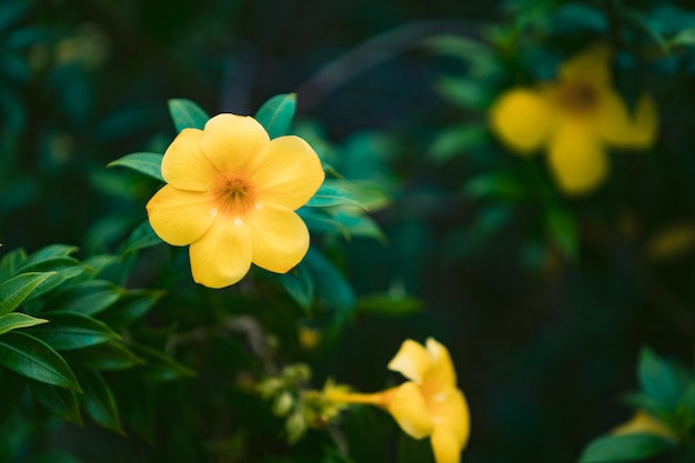 Jardim de flores amarelas e folhas verdes com fundo desfocado.