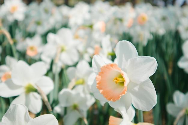 Jardim de flores brancas