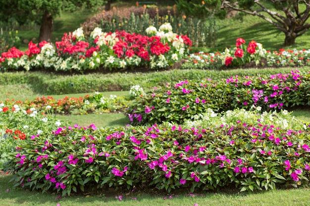 Jardim de flores com colorido