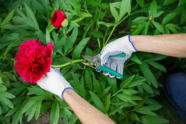 Jardim de flores de poda do jardineiro. foco seletivo. natureza.