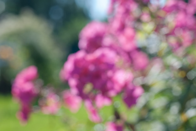 Jardim de flores desfocadas em um dia de verão