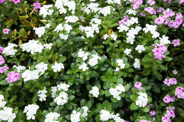 Jardim de flores pequeno.