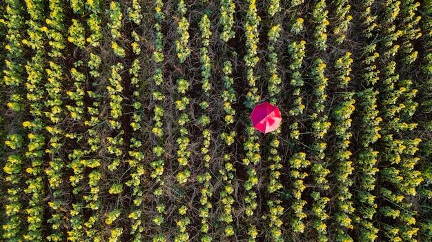 Jardim de flores, vista aérea superior, fundo com lindos guarda-chuvas coloridos