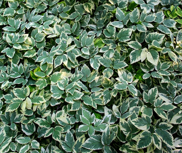 Jardim de fundo de folhas verdes