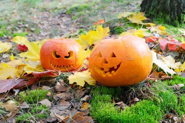 Jardim de halloween decorado com abóboras laranja esculpidas