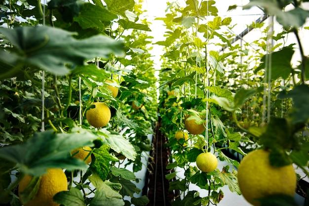 Jardim de natureza colheita de melada orgânica