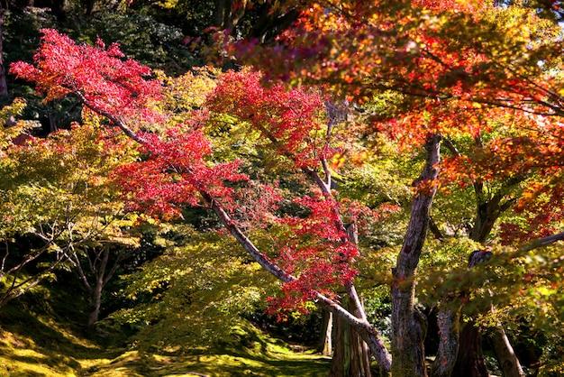 Jardim de outono do templo de tofuku-ji, kyoto