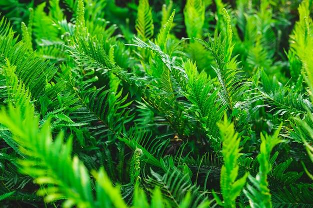 Jardim de samambaia e árvore de samambaia