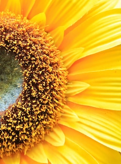 Jardim flor amarela da rodada orgânica