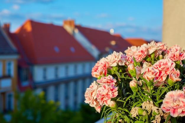 Jardim frontal na varanda. flores em vasos com uma cidade ao fundo