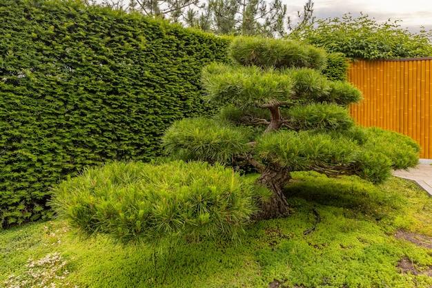 Jardim japonês no parque aivazovsky paradise landscape park partenit crimea