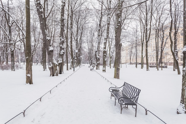 Jardim mikhailovsky e seu caminho nevado com bancos no inverno.