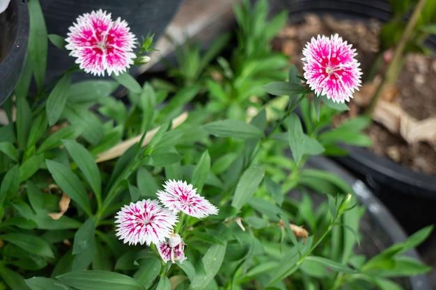 Jardim mínimo de flores em casa, fotografia
