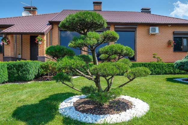Jardim no quintal com bonsai bem aparados, arbustos e árvores em frente à villa de estilo europeu. projeto paisagístico. foto de alta qualidade