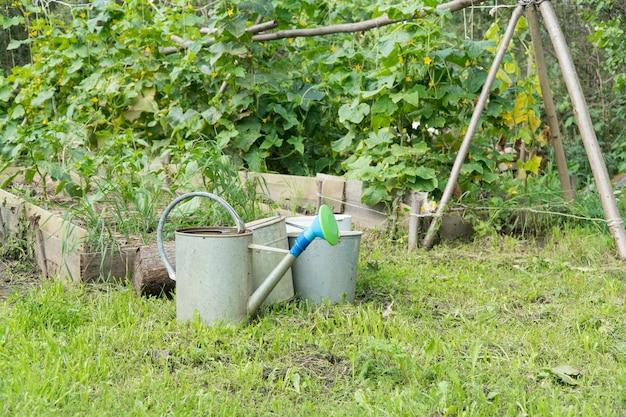 Jardim no quintal com mudas e regador