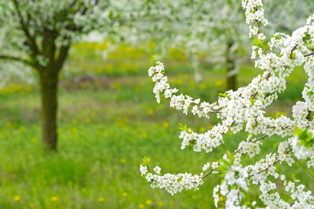 Jardim ornamental com grandes árvores em flor majestosa em um gramado verde fresco.