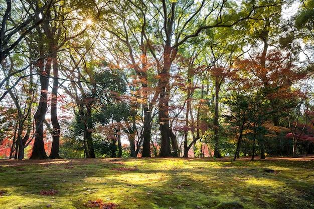 Jardim outono