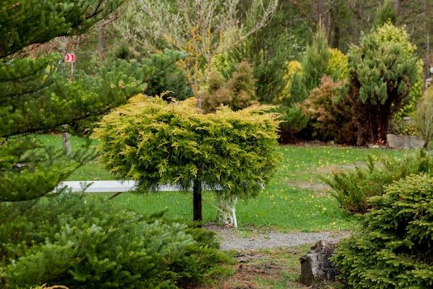 Jardim, paisagem de forma geométrica arbusto e arbusto decoram com flores coloridas, florescendo em verde