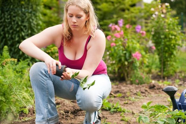 Jardim - plantio de mudas de morango