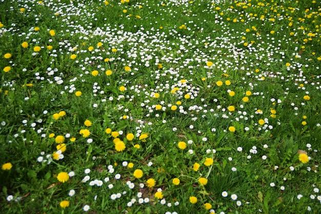 Jardim primavera verde com flores brancas e amarelas