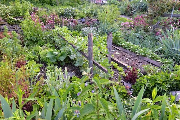 Jardim rural atraente e bem abastecido com flores desabrochando e vegetais crescendo