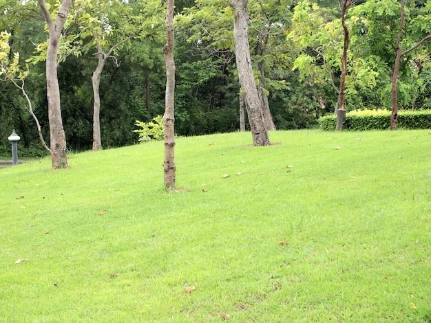 Jardim tranquilo com gramado recém cortada