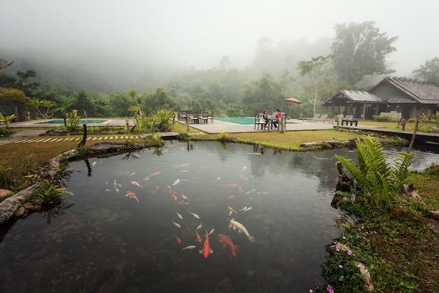 Jardim tropical piscina de manhã