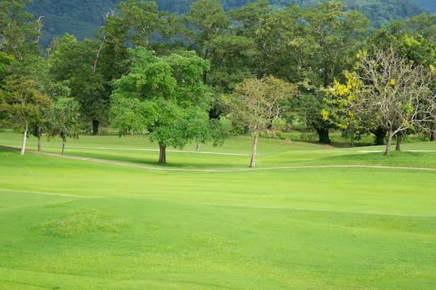 Jardim verde e paisagem ao ar livre e fundo de árvores
