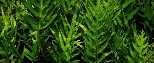 Jardim vertical com folha verde tropical, contraste