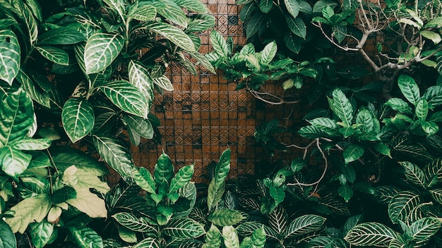 Jardim vertical com folha verde tropical, tom escuro
