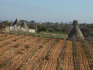 Jardim vinha