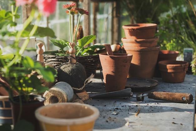 Jardinagem cultive o conceito das plantas da plântula do crescimento